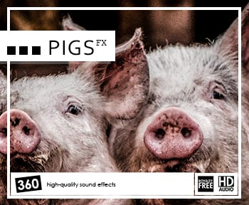 pigs-fx-album