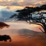Africa
