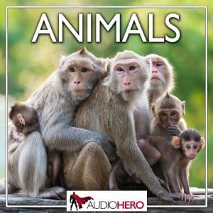 Audio-Hero-Animals-rev-300x300